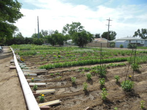 communitygardens