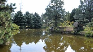 houston gardens pond 2