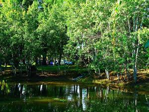 Charmant Houston Garden Conservation Pond