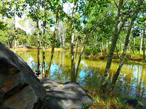 houston-garden-pond
