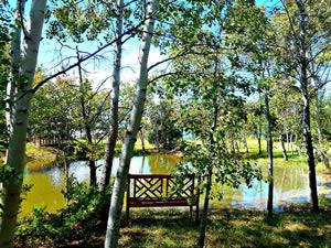 houston gardens bench2 - Houston Garden