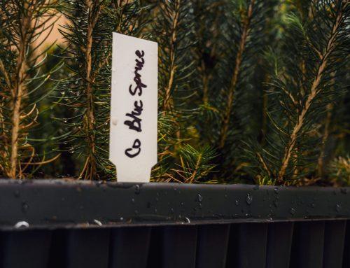 Tree Sale 2022